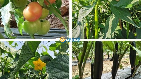 蔬菜施肥需要注意什么?谷雨这样施肥才对