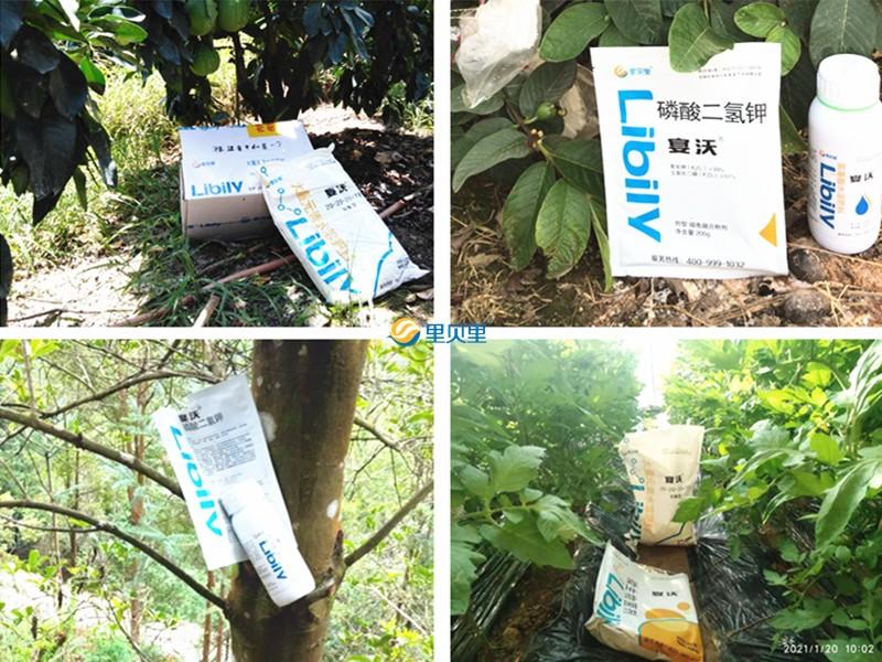 进口水溶肥-宴沃在作物上使用
