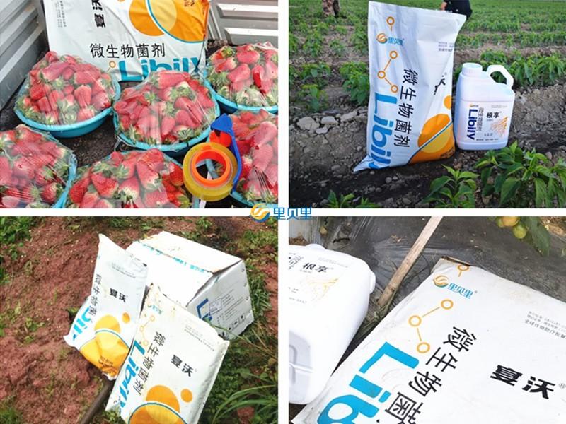微生物菌剂-宴沃在作物上使用