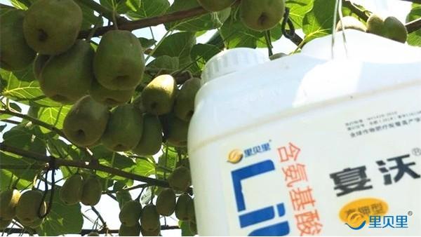 果树冬季施肥哪种肥好?