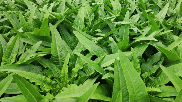 蔬菜用什么肥料好?里贝里帮你解决种植难题