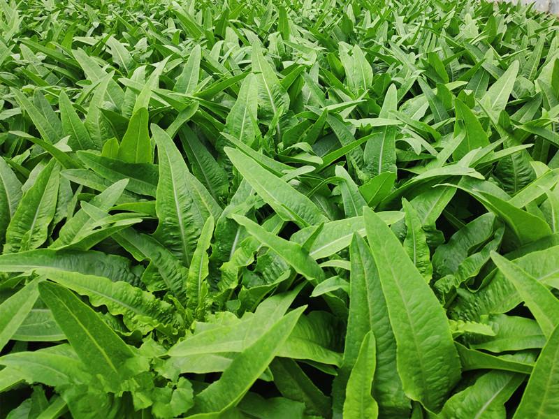 蔬菜用什么肥料好