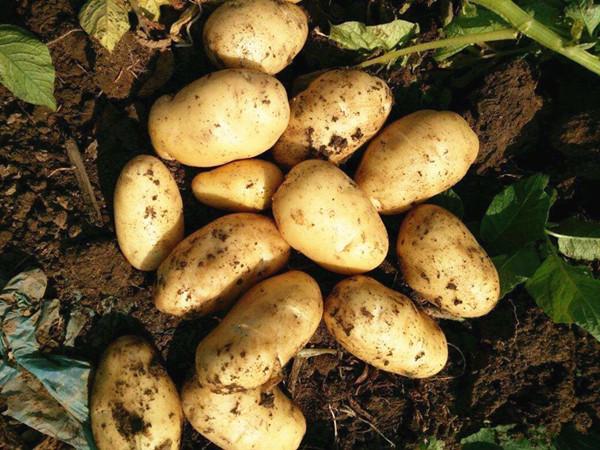 哪家马铃薯专用水溶肥好?