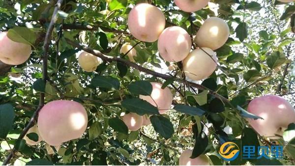 果树月子肥这样选,来年果树不用愁