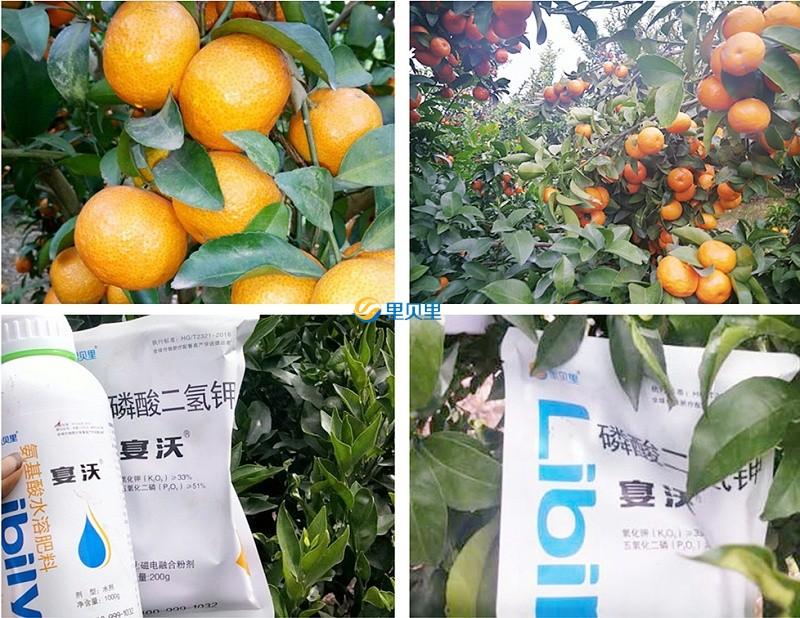磷酸二氢钾宴沃在柑橘上使用