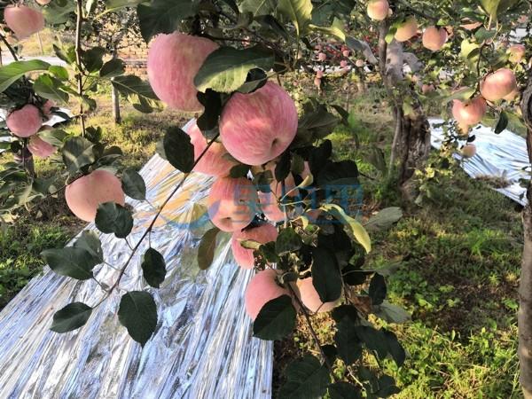 水溶肥厂家-宴沃苹果