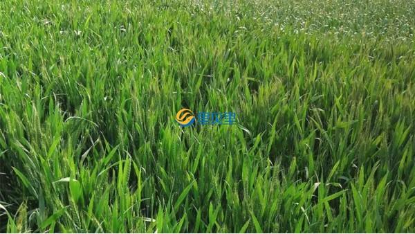 作物抗逆是农业发展新方向,一定要重视!