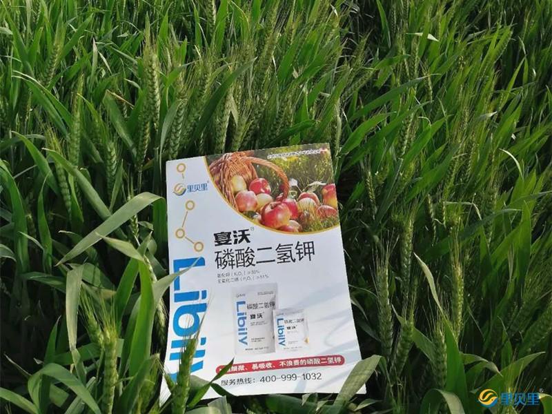 小麦冬季管理技术