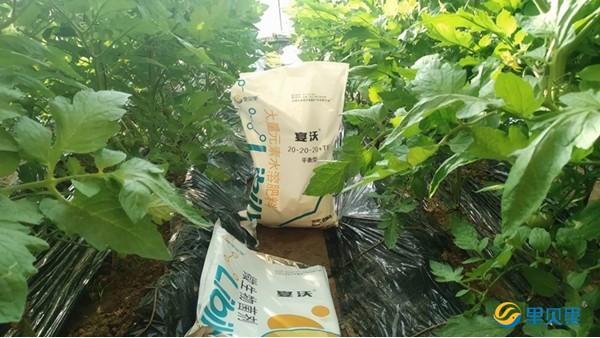 水溶肥料和水溶肥性复合肥要分清