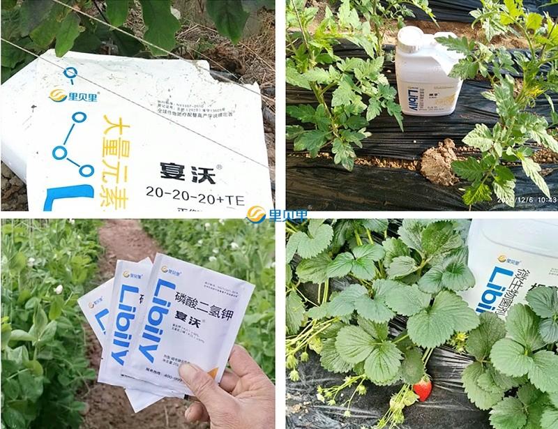 水溶肥在作物上使用