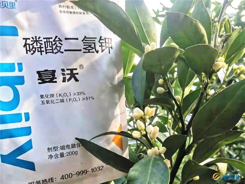 磷酸二氢钾-沃柑