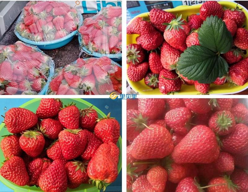 水溶肥宴沃-草莓使用反馈