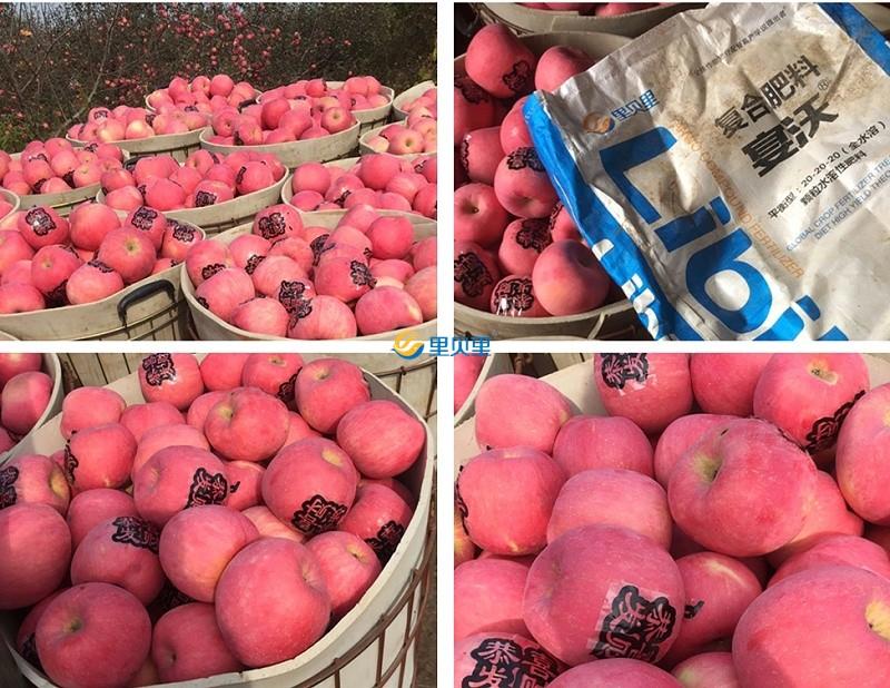 果树水溶肥-苹果