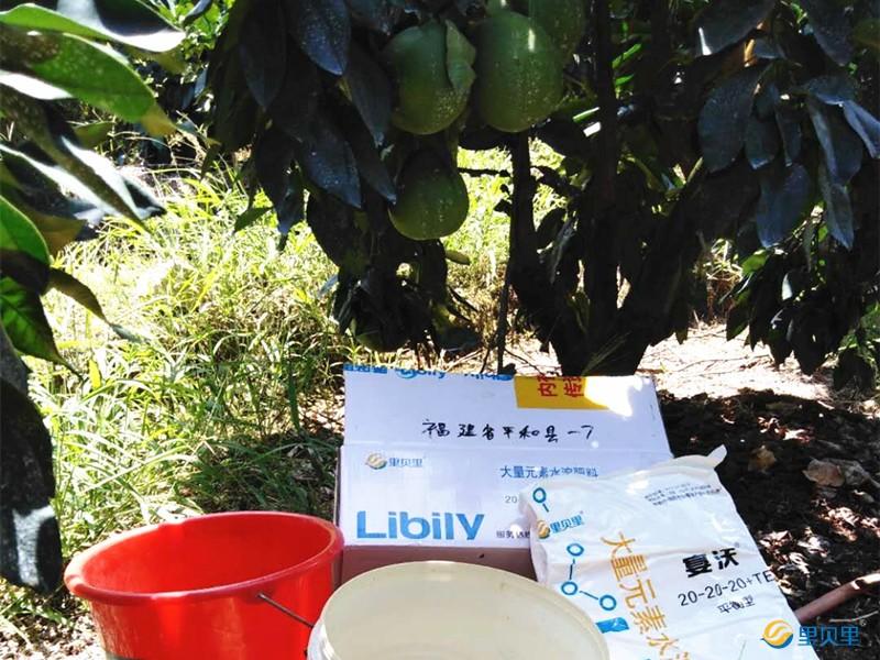 水溶肥在蜜柚上使用