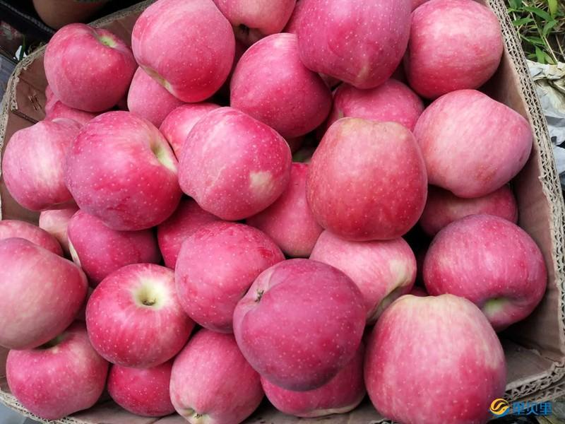 苹果树开春怎么施肥