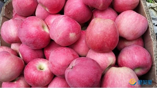 苹果树开春怎么施肥?你想知道的都在这儿!