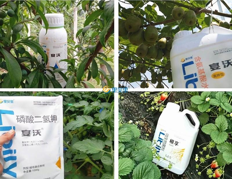 水溶肥价格-作物使用反馈