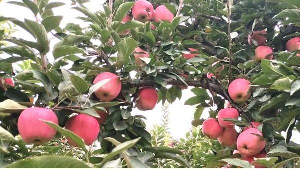 农业发展新方向,电商带动消费发展