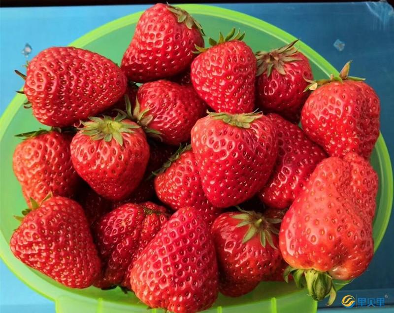 草莓水溶肥什么牌子好