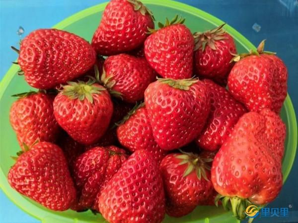 草莓水溶肥什么牌子的好?