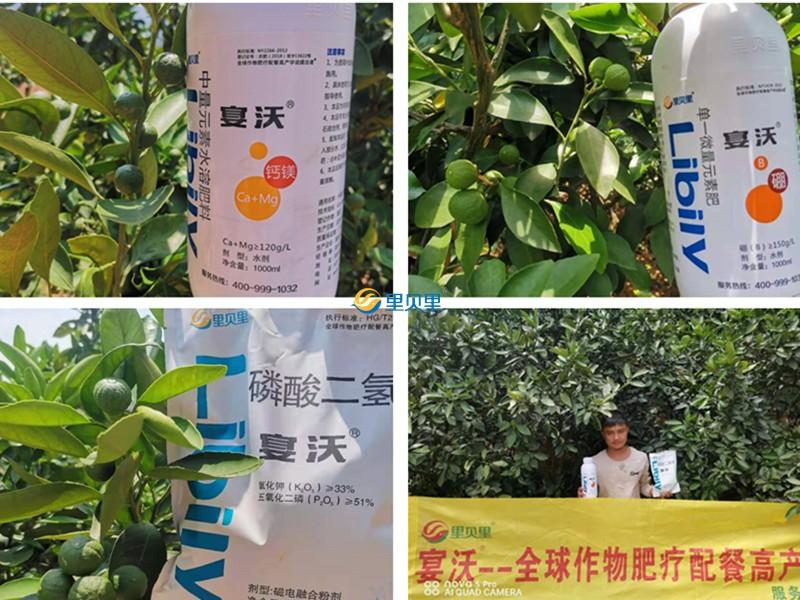 农资-柑橘使用宴沃水溶肥