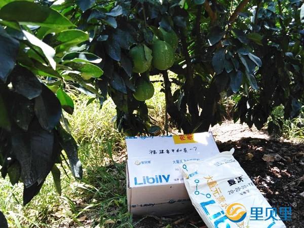 果树施什么肥料能增加甜度?