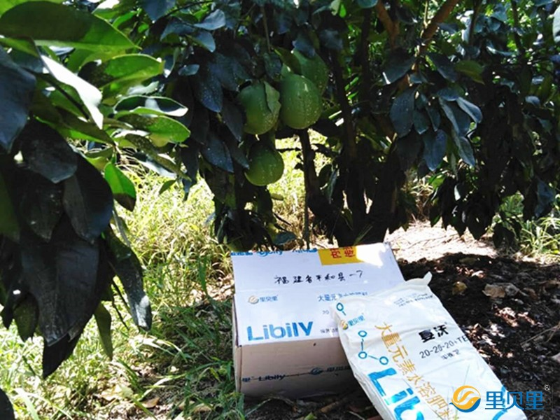果树施什么肥料能增加甜度-蜜柚