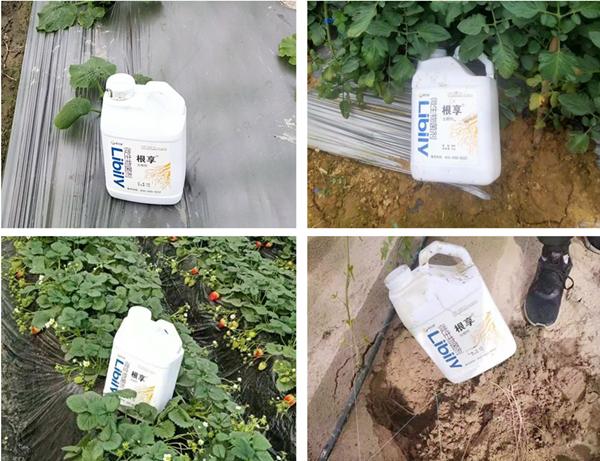生根剂的使用方法,你知道几个?