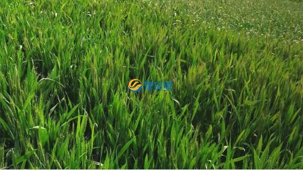 春季农作物怎么施肥?农业农村部施肥方案来了!