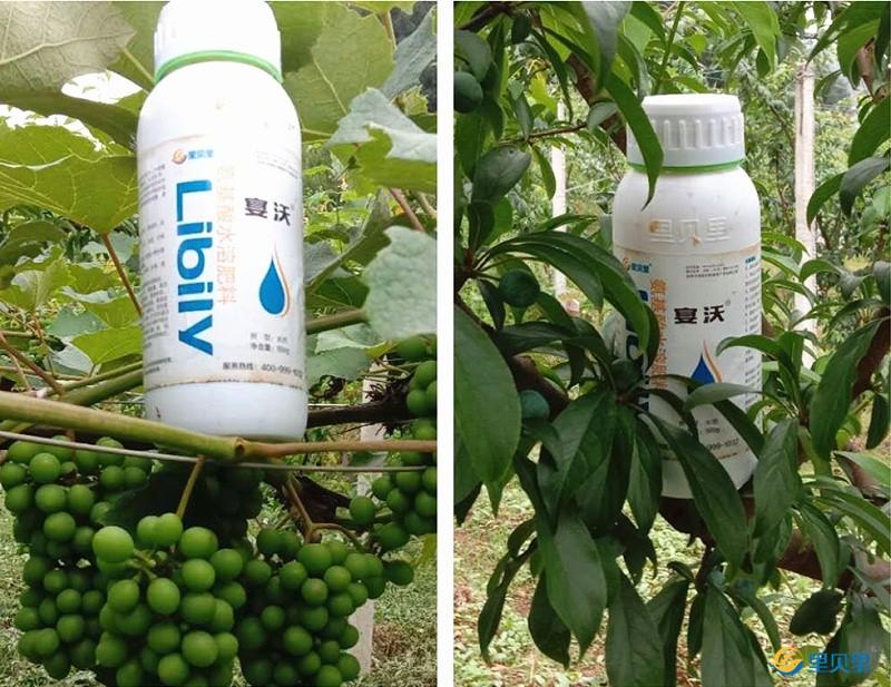 氨基酸水溶肥在作物上使用