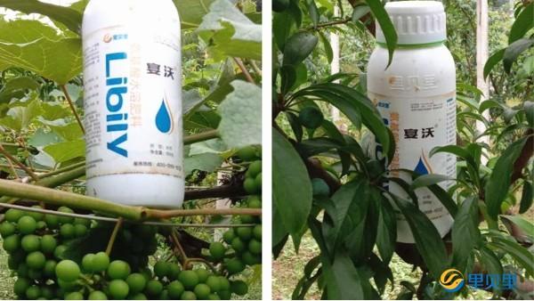 氨基酸水溶肥受农资人喜爱的3大优势!