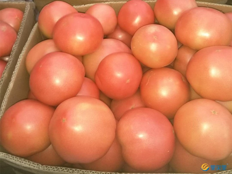 番茄缺钾转色慢怎么办