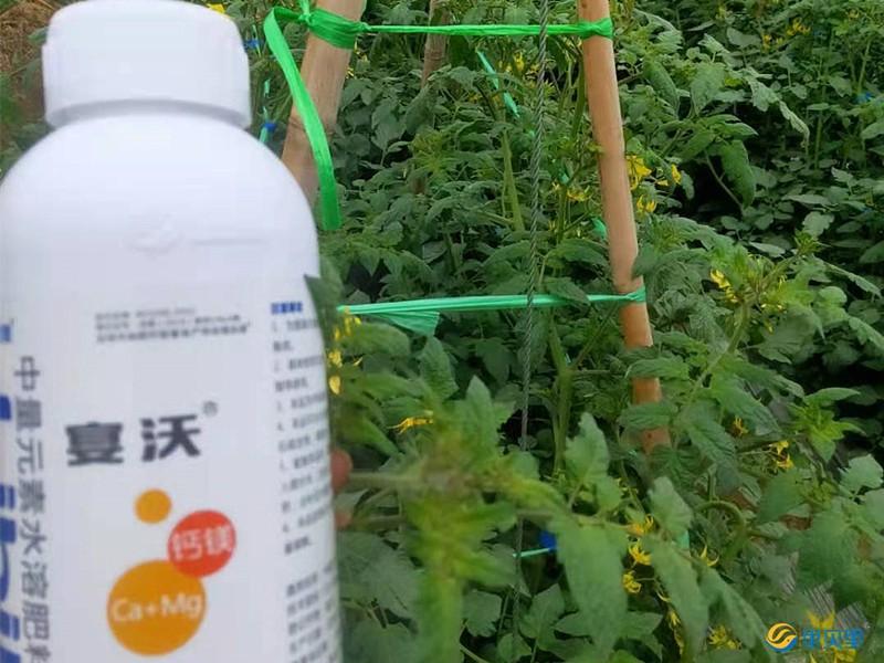 钙肥在草莓上使用
