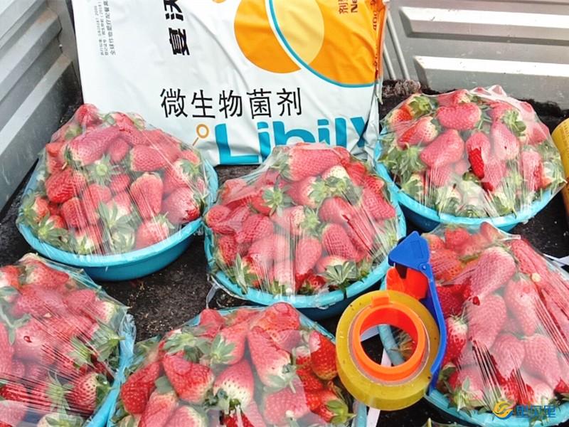 进口水溶肥在草莓上使用