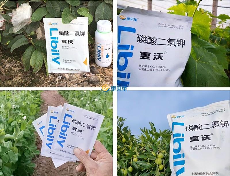 叶面肥宴沃在作物上使用效果
