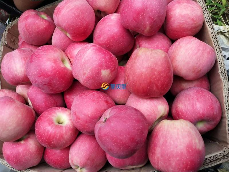 磷酸二氢钾-宴沃在苹果上使用