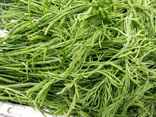 蔬菜用什么肥料好?