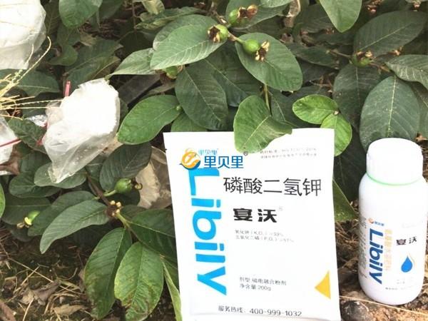 干货!氨基酸类肥料大热,你买了吗?