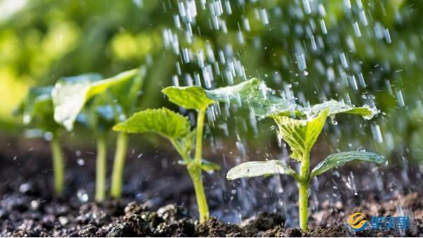 蔬菜什么时候浇水好?你做对了吗?