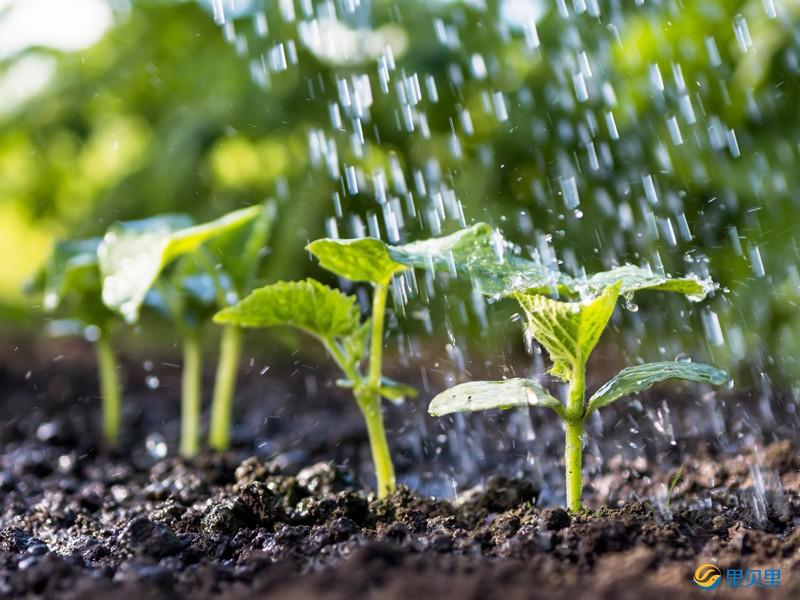 蔬菜什么时候浇水好