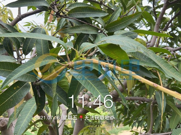 果树施肥7月是关键!