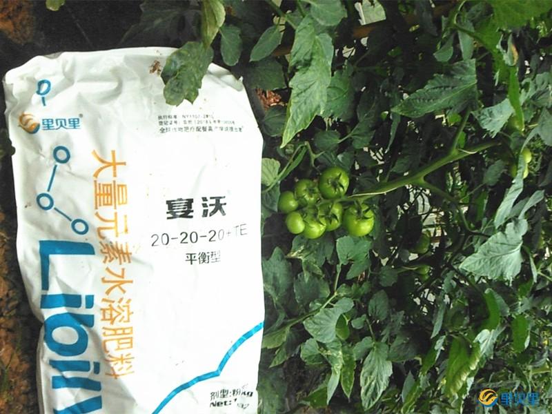 西红柿用什么肥料好