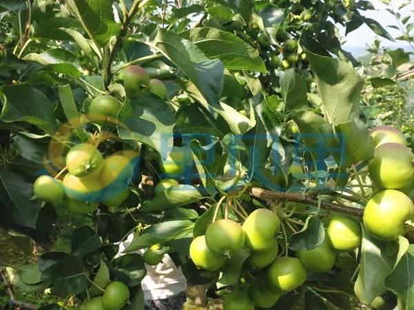 果树什么时候施肥好?