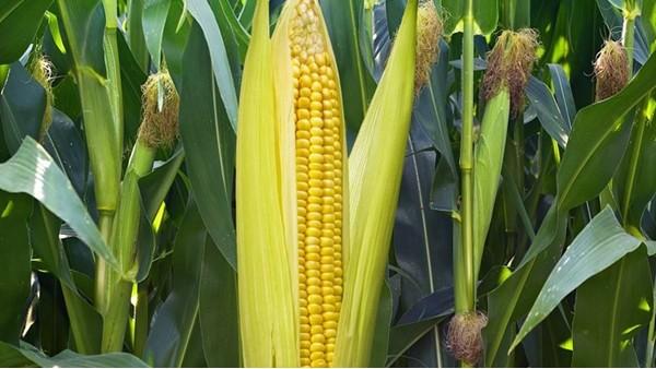 磷酸二氢钾是什么肥料,用和不用有区别吗?