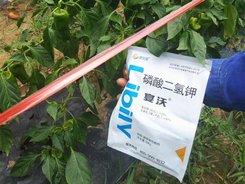 水溶肥厂家-辣椒