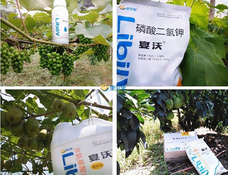 郑州里贝里生物科技有限公司-作物使用效果