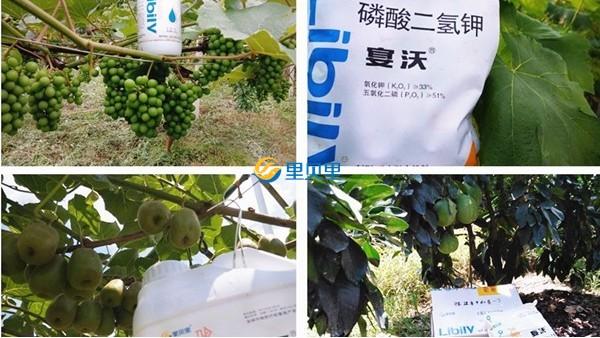 郑州里贝里生物科技有限公司,你值得选择