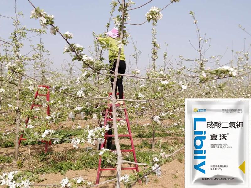 水溶肥厂家-苹果