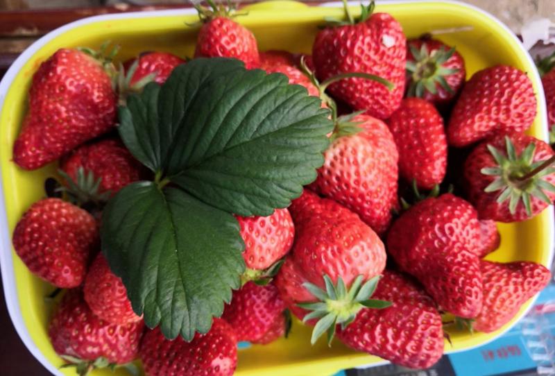 水溶肥厂家-草莓果