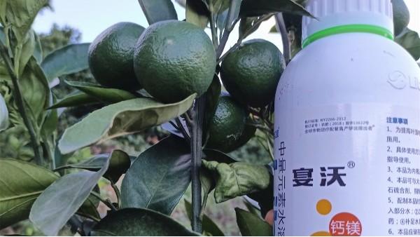 夏季果树施肥-宴沃柑橘